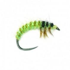 OE Hydropsyche Larva V2