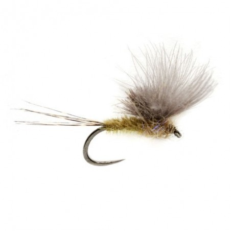 McPhail CdC Olive