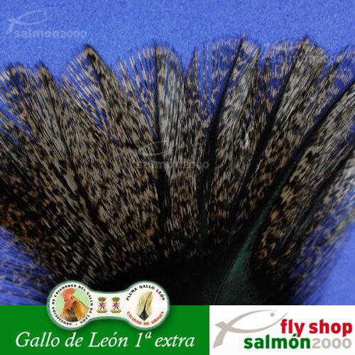 Pluma Gallo de León