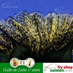Plumas Gallo de León